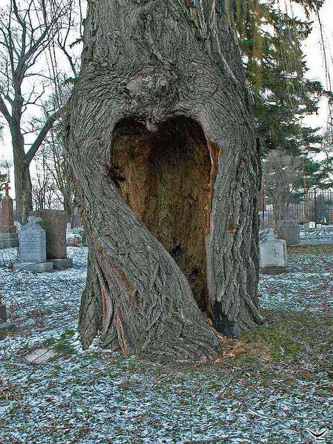 "Mother Natures Heart. I think this is so beautiful. Especially since its in a Cemetery. ""Back to Mother Earth."""