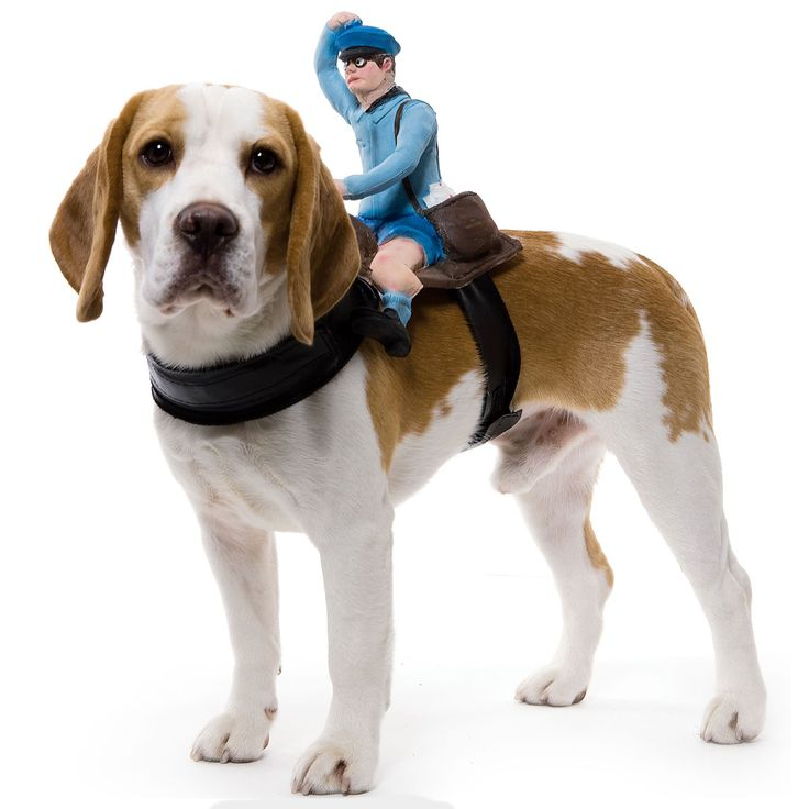 mailman dog rider costume halloween costumes for dogspet - Halloween Costumes For Labradors