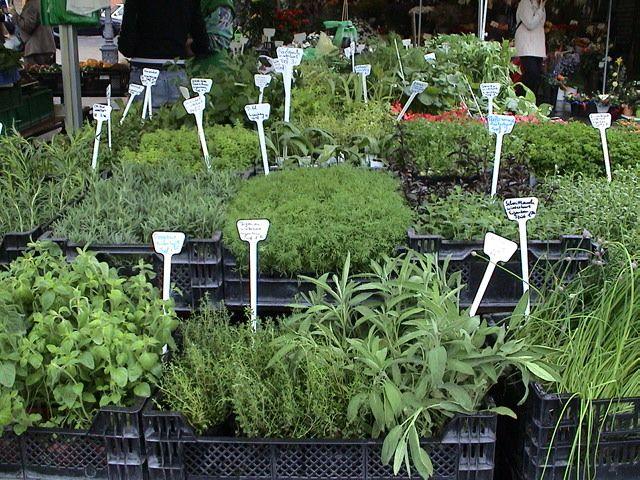 """""""A propriedade medicinal de uma planta não é só o resultado de uma composição química, mas também de sua vibração energética."""""""