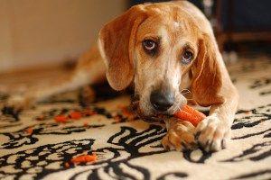 Vegan Dog Food Nutrition: Guide to Feeding Your Dog Vegan
