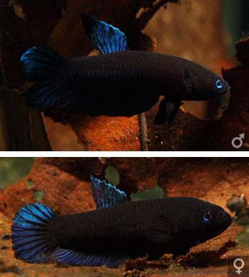 17 best images about tiny aquarium on pinterest cichlids for Best water for betta fish