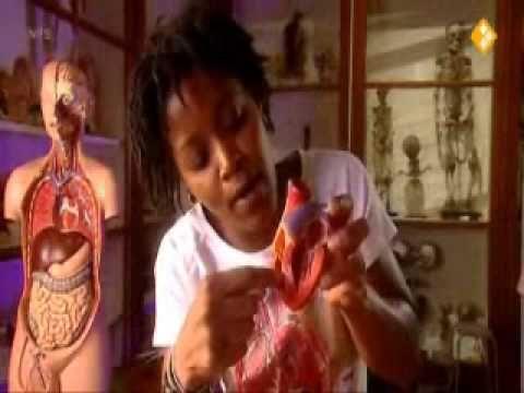 Film en vragen Bekijk het filmpje van Klokhuis over het hart. Bedenk bij het filmpje 10 kijkvragen. Dat zijn vragen die anderen moeten kunnen beantwoorden nadat ze het filmpje hebben gezien. Lever deze vragen in.