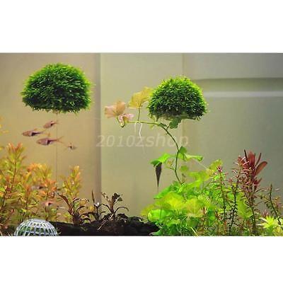 Acquario-Semisfera-Per-Crescere-Muschio-Piante-Filtro-Serbatoio-Di-Pesce