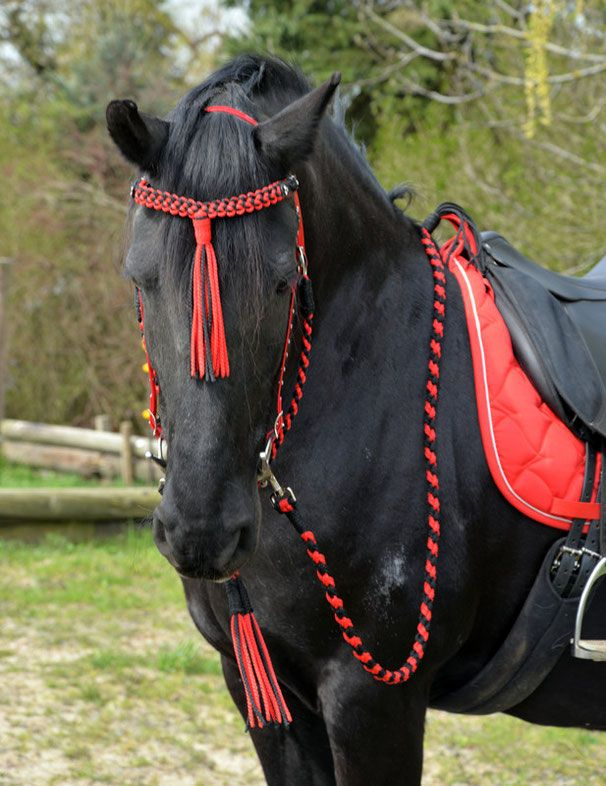 Western & CO - MH.Flechtdesign!Handgefertigte Unikate für Pferd & Hund