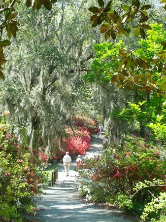 Exceptional Middleton Place, Charleston, SC: Pathway Just Starting To Bloom.