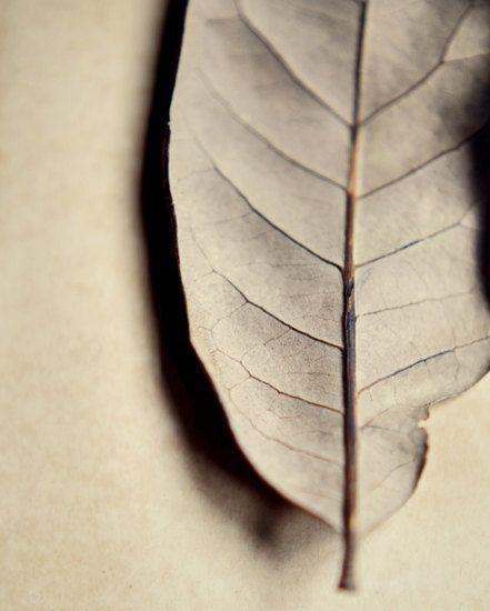 Minimalist leaf photograph cream botanical by dullbluelight