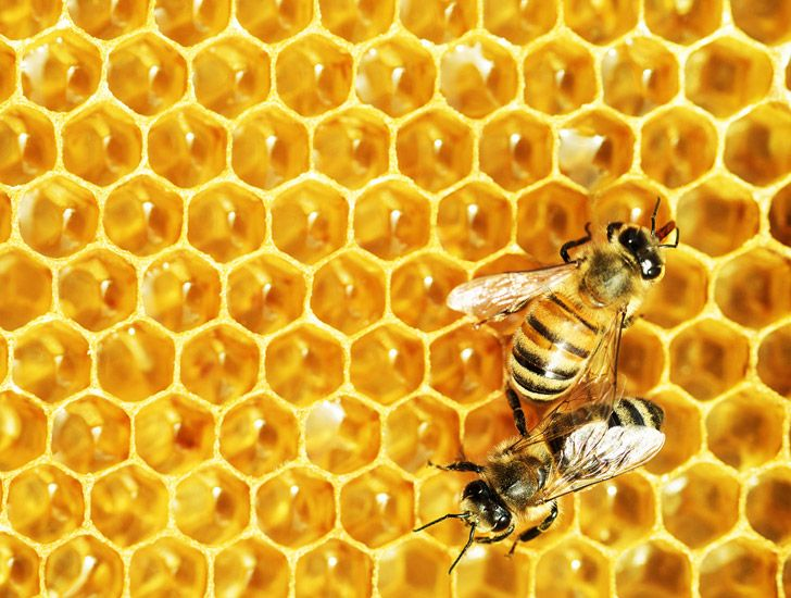 The Healing Power of Honey – Did you know that Honey…??