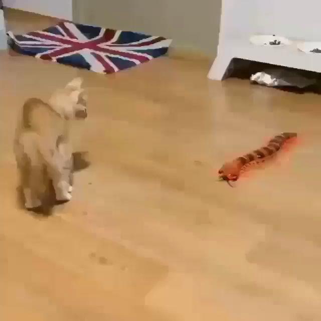 Kitten vs the robot bug – Cool Cat Tree House