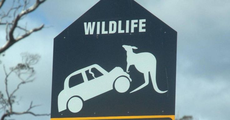 34 of the Funniest Street Signs on the Open Road