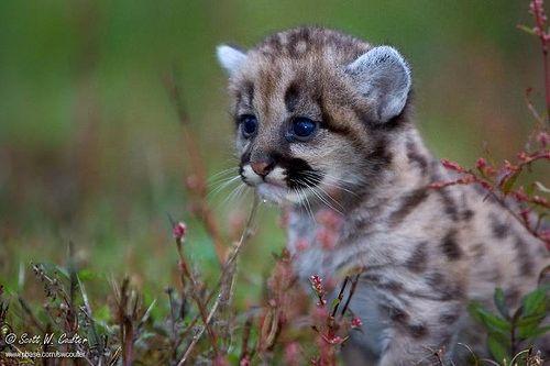 Bebek Jaguar | Flickr - Photo Sharing!