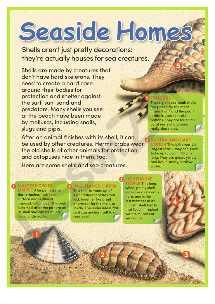 This illustrated article, 'Seaside Homes', provides information about sea creatures that live in shells. For the 2 page download, visit http://lessonzone.com.au/seaside-homes/