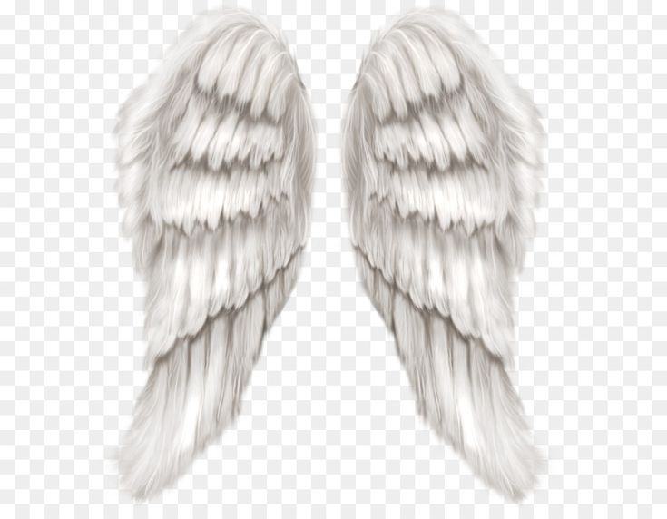 Cherub Wing Angel - White Angel Wings Transparent PNG Clip Art Image