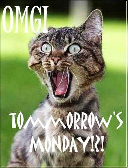 *Hate Mondays, Funny Things, Fav Pin, Funny Pictures, Funny Cat, Funny Stuff, Belly Laugh, Tomorrow Mondays, Cat Photos