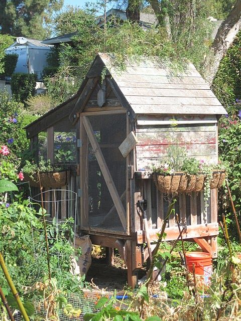 cute chicken coop    I like the idea of window sill flower baskets off the side of the coop - - great use of space!