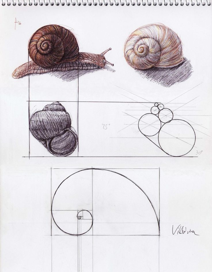 Best images about architecture of god the golden ratio