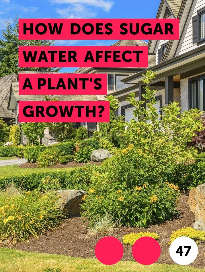 Learn How Does Sugar Water Affect A Plant S Growth How To Guides Tips And Tricks Kill Tree Roots Plants Garden Soil