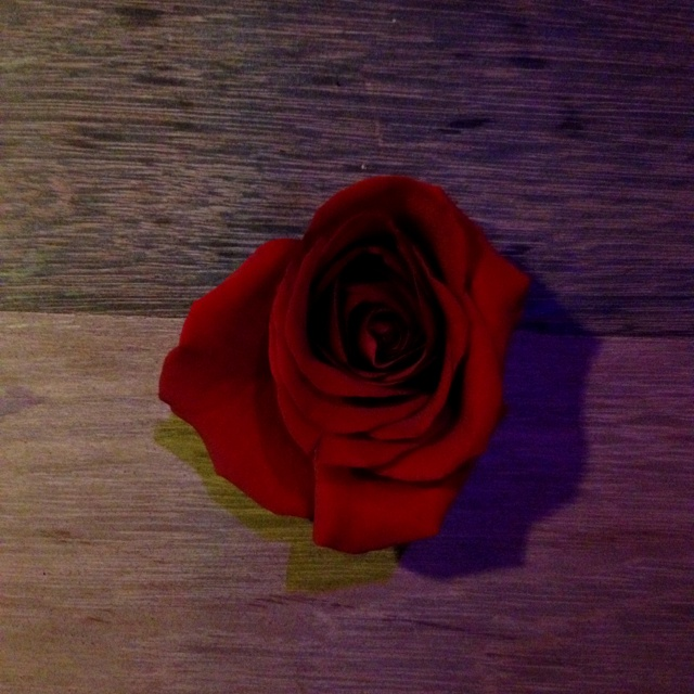 Rose @ ACR