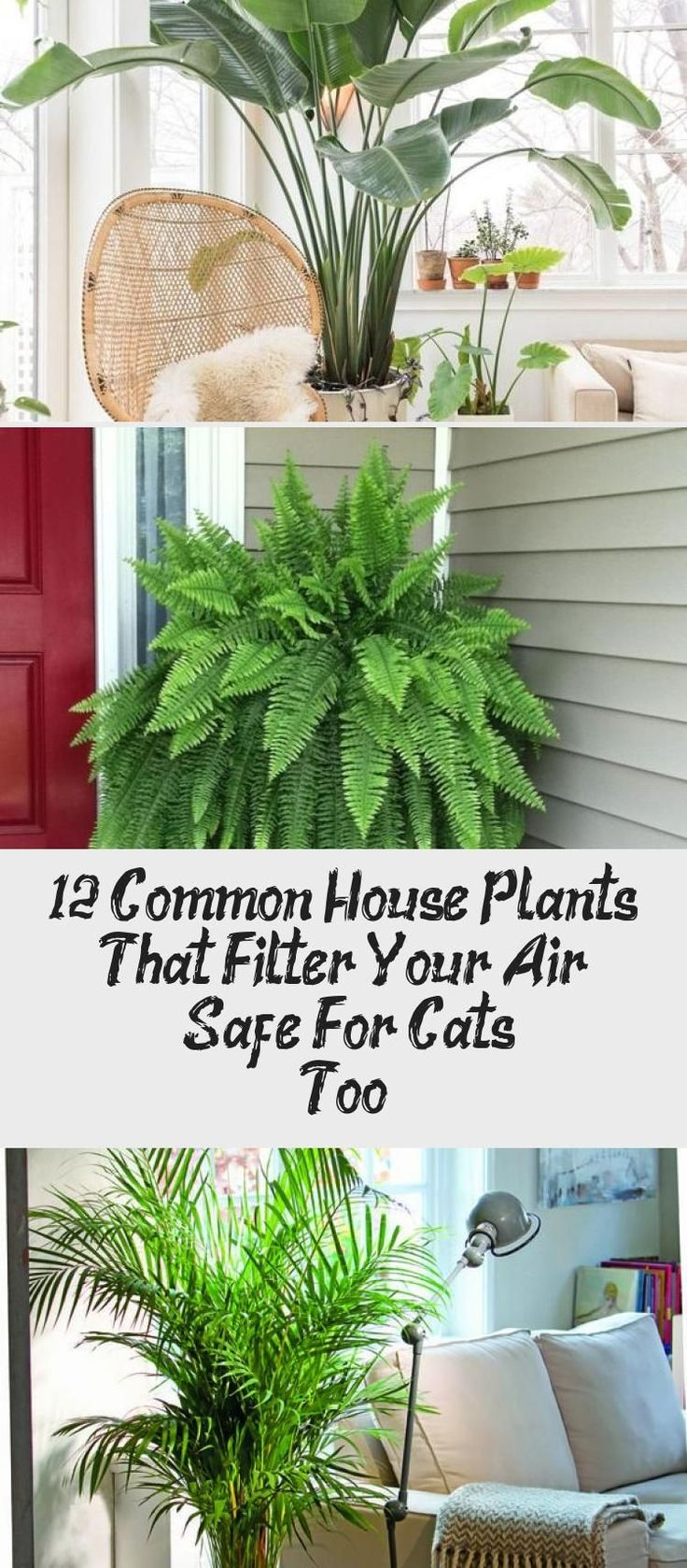 12 Common House Plants That Filter Your Air - Safe For ...