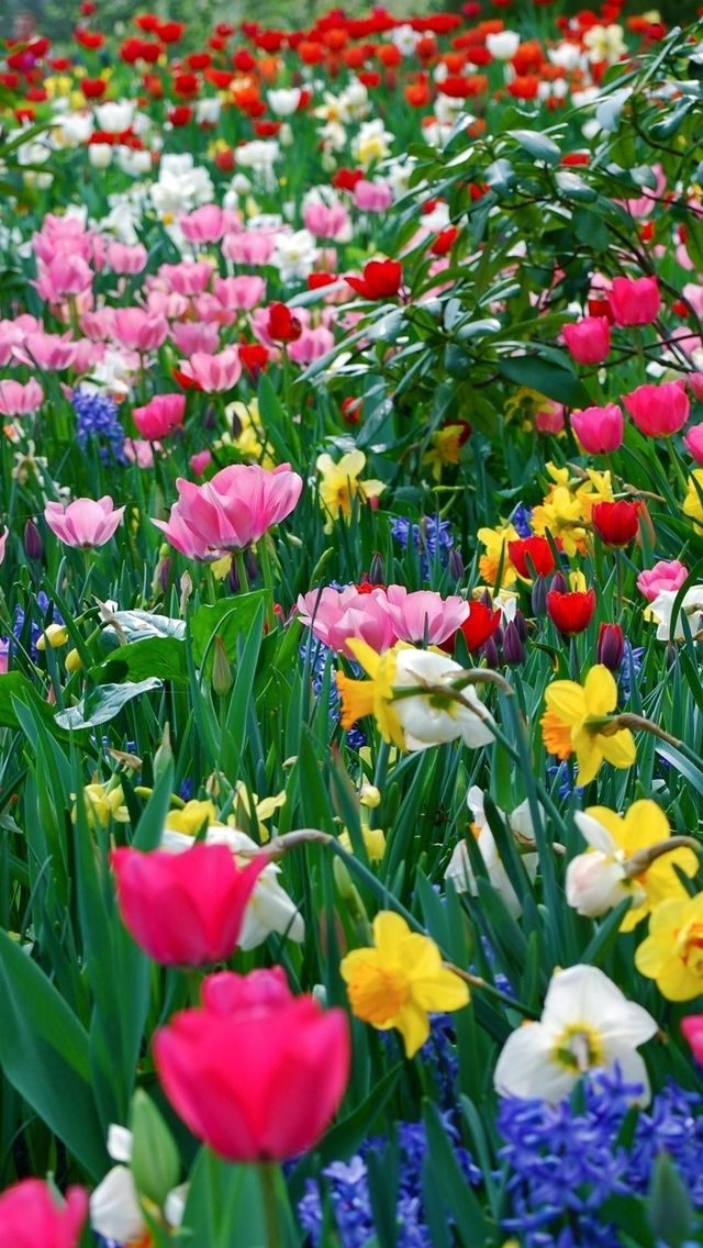 3) Color my world - Spring flowers...