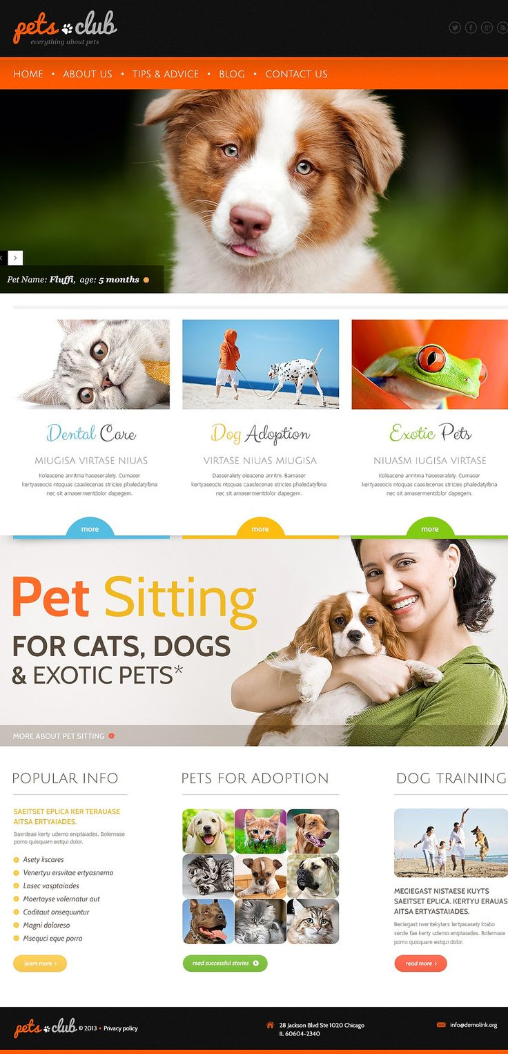 17 best Humane Society Project images on Pinterest