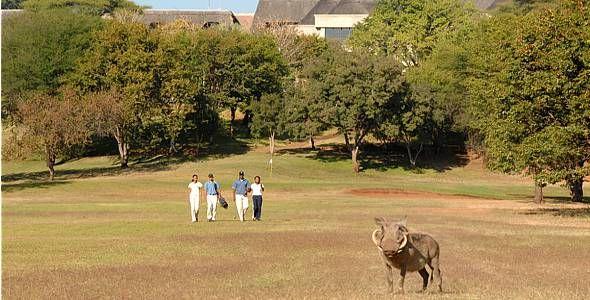 Elephant Hills Resort, Victoria Falls, Zimbabwe.  Please pause play for wild boar.