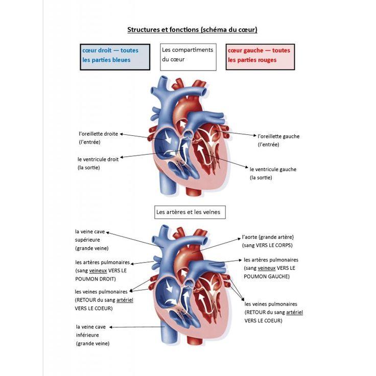 Système circulatoire (jeu de société)