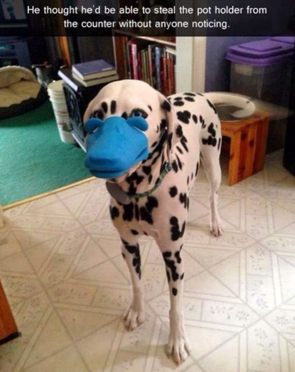 12 Dogs With a Habit of Stealing Some Really Funny Things