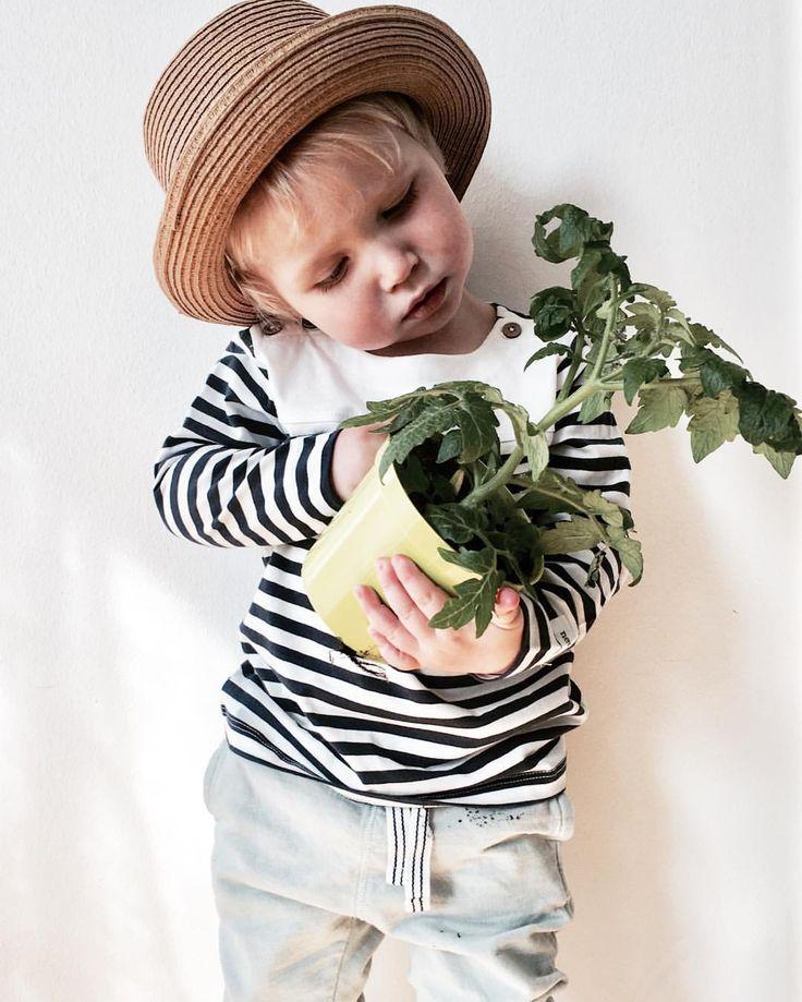 @emmawendel87 Dags o plantera om våra tomatplantor som växer som ogräs inne i tvättstugan  . . . . . . #dagensoutfit#fashionforminis#fashionforkids#inspirationforbarn#inspirationforbarn#inspirationforpojkar#inspo#kids#ootd#tomatplantor#eko#egenodlat#älskadebarn#newbie#kappahlkids#lindex#fashion#navystylehosifp