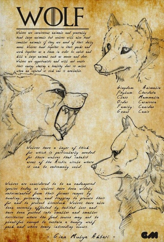 Gian's Creatures Journal : WOLF