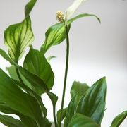 The Highest Oxygen-Producing House Plants | eHow