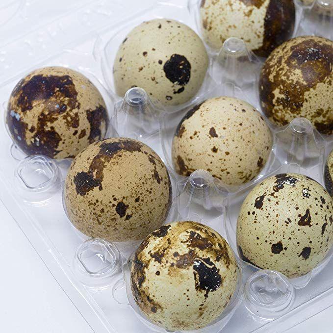 Quail Egg Cartons Pack Of 50 Each Holds 12 Quail Eggs Bulk Carton For Dozens Of Small Eggs Quail Pheasant Or Grouse Cartons Quail Eggs Egg Carton Quail