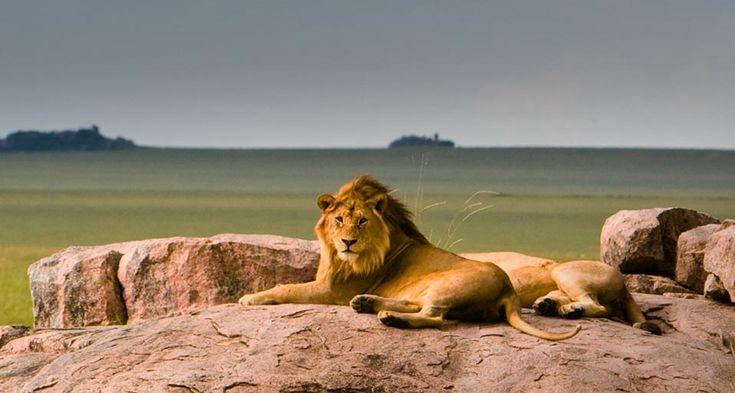 "Lazing around on ""Pride Rock"" www.africatriedandtested.com"