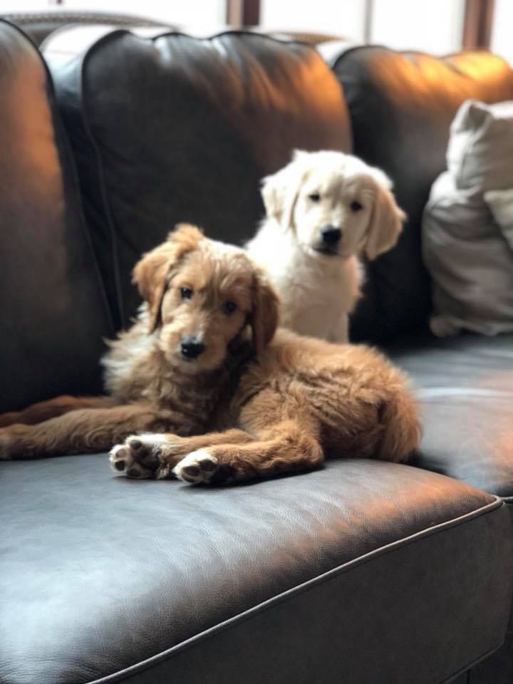 Jj Watt And Hi Girlfriends New Puppies Tex And Houston