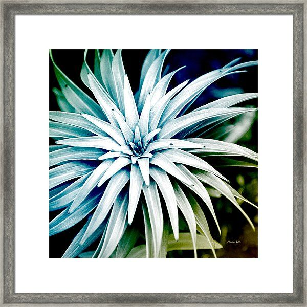 Blue Spiral Plant Abstract Framed Print