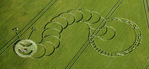 """Un agroglyphe ( ou """"crop"""") de notre chère chenille !!!!!"""