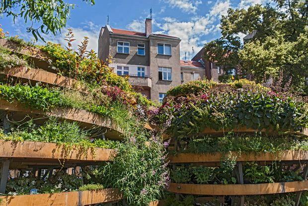 Co mogą rośliny? Niezwykły eksperyment na wrocławskim podwórku   Inspirowani Naturą   nieskończony zielony