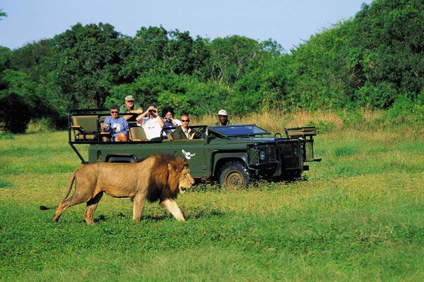 River African Safari | nightlife, wildlife, falls, river, luxury bungalows, safari