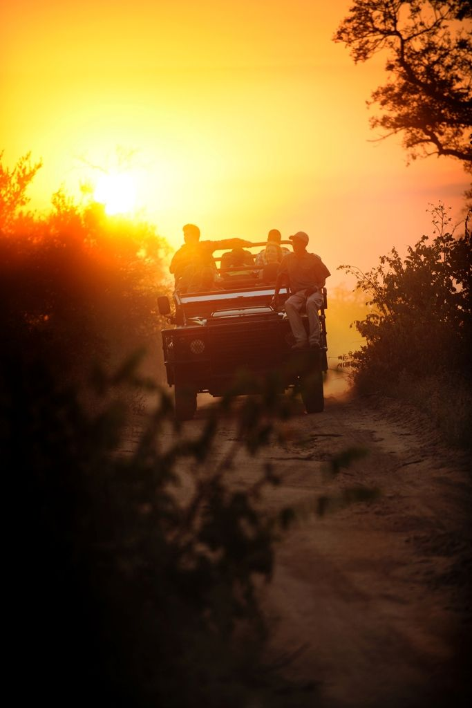 Game Viewing | Newmark Hotels
