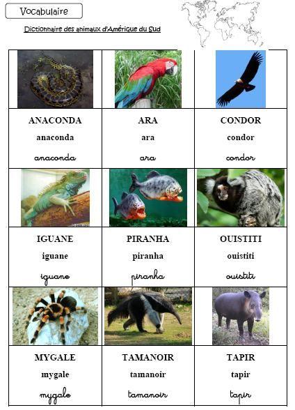 Dictionnaire et loto des animaux d'Amérique du sud - L'école de Crevette