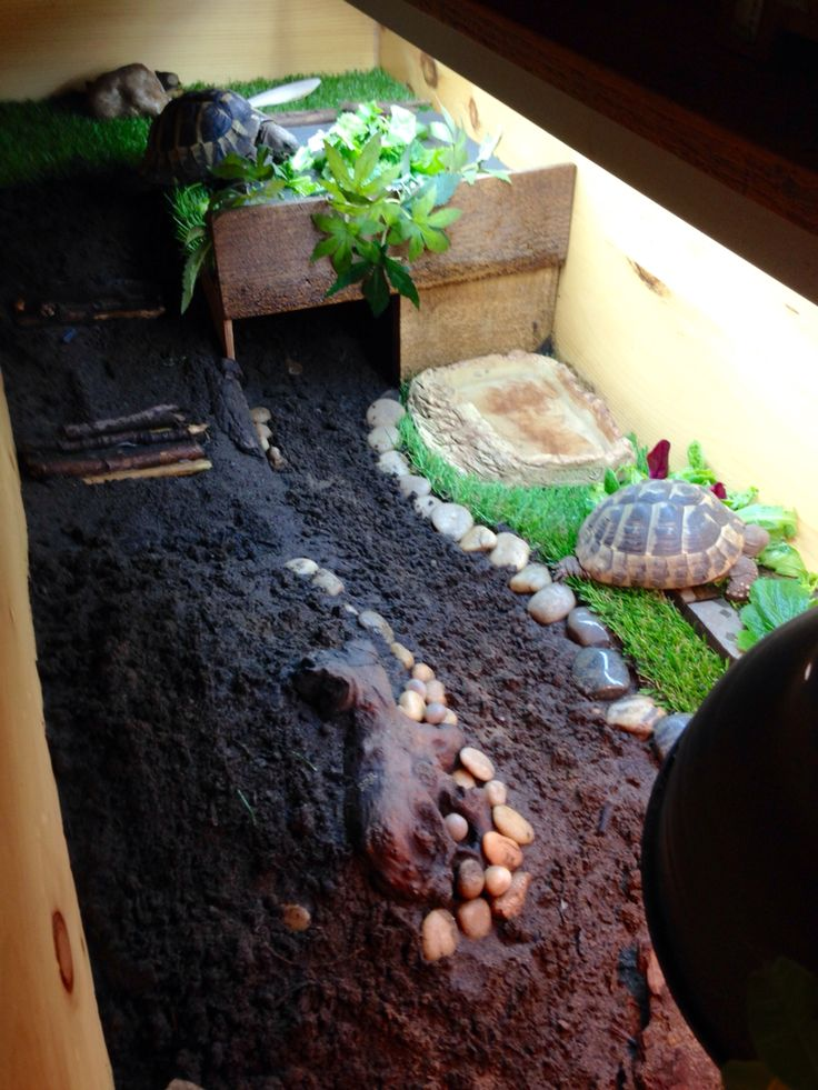 Our tortoise table has a large hide where they can go right back to cool off and sleep. The soil and sand mix is around 3 inches deep so they can dig down to regulate there heat. Hermann tortoises love to dig!
