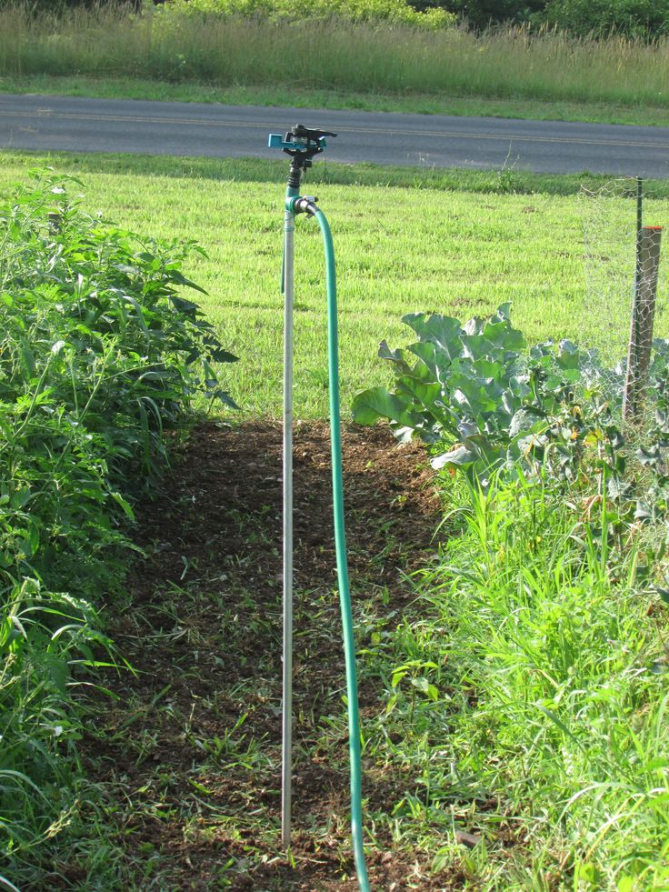 My husband created a movable garden sprinkler system, which can be made by attaching a sprinkler to a metal tomato stake with garden wire.  A cheap sprinkler, such as this one we got for $1 at a local thrift store, can cover around 30' in diameter.  Aside from the hose, you can easily add an overhead sprinkler system for under $5 to your garden. - July 3, 2014