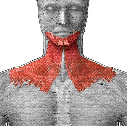 Stand with good posture with your head in its natural position. Push your jaw out and lift your lower lip as high on your face as possible. Hold it in that position for 10 seconds, then relax. You should feel the muscles directly underneath your chin stretch a bit.  And you will REALLY feel this in your jaw and jawline!