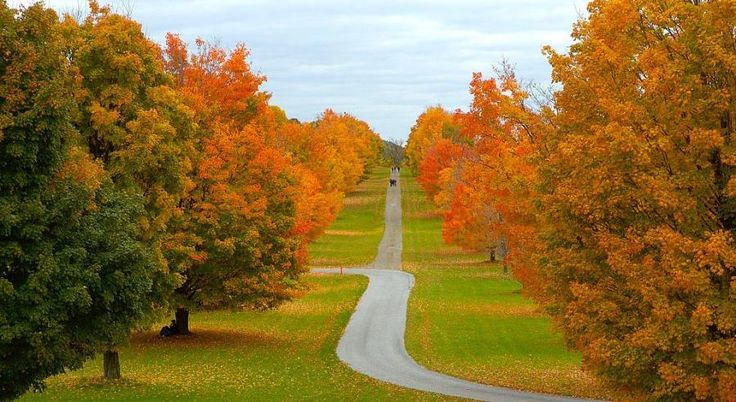 : Beautiful Autumn, Autumn Tear, Colorful Autumn, Colors Autumn, Autumn Glories, Autumn Colors, Autumn Trees, Colors Paths, Wind Roads