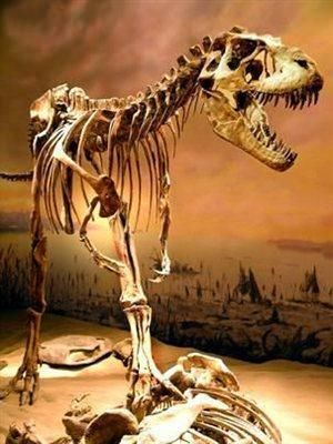 Albertosaurus skeleton. (Credit: Images courtesy of the Royal Tyrrell Museum)