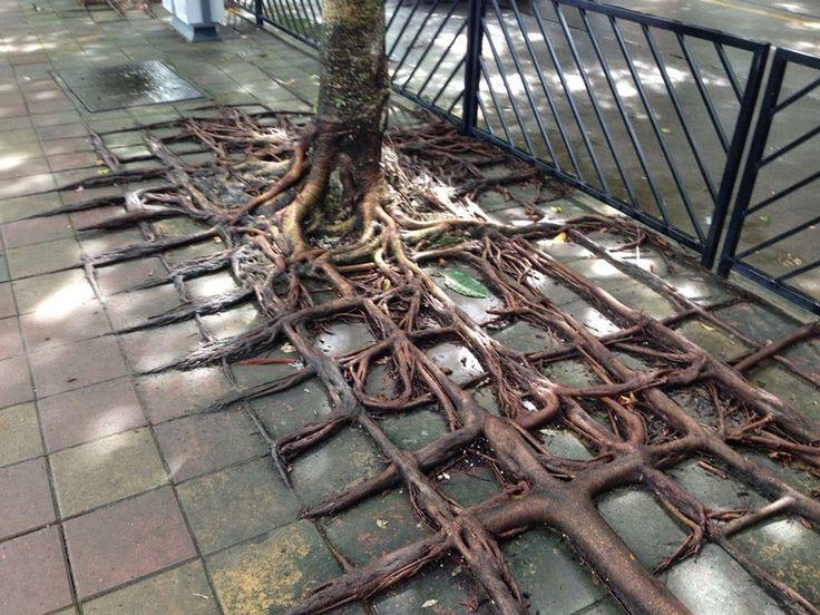 La desigual lucha de unas pocas raíces contra el asfalto
