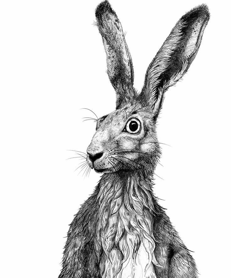 hare. illustration. drawing. feldhase. zeichnung. all rights reserved by von ERIKA.
