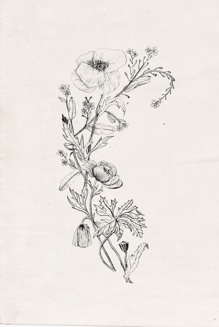 25 best ideas about delicate flower tattoo on pinterest for Art minimaliste pdf