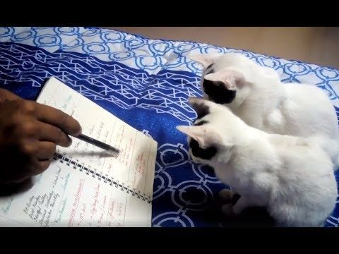 Very Attentive and Studious Cats Ever- That Must Make Your Day Happy | A...