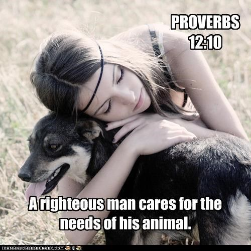 The godly care for their animals, but the wicked are always cruel. Proverbs 12:10 NLT http://bible.com/116/pro.12.10.NLT