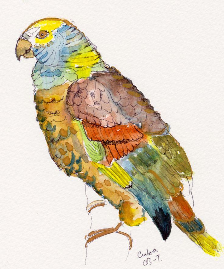 Parrot in Cuba. http://www.turquoisemoon.co.uk